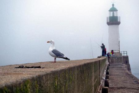 Port tudy, brouillard, goëlan
